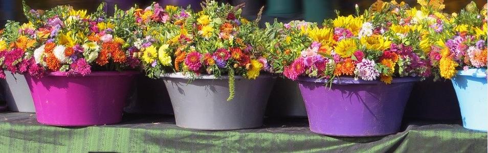 Tontöpfe bemalen und bepflanzen